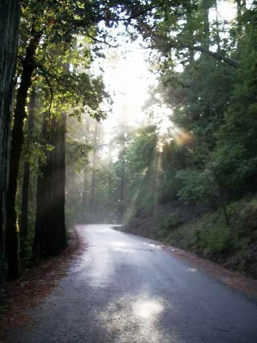 Twisty redwoods
